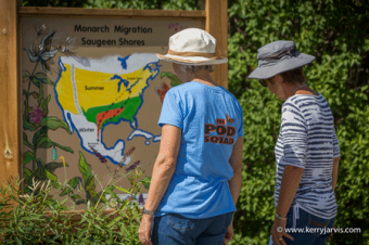 Monarch tagging September 2016