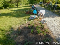 bgoss-planting-day-perkins-park-june-18-2016-image-by-kerry-jarvis-6