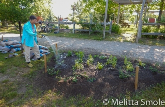 bgoss-planting-day-perkins-park-june-18-2016-image-by-kerry-jarvis