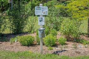 BGOSS Perkins Park plants UNE 27 2017 image by ©kerry JARVIS-9