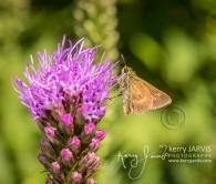 Mariposa gardens test shots canon 5d mark IV July 27 2017 image by ©kerry JARVIS-92