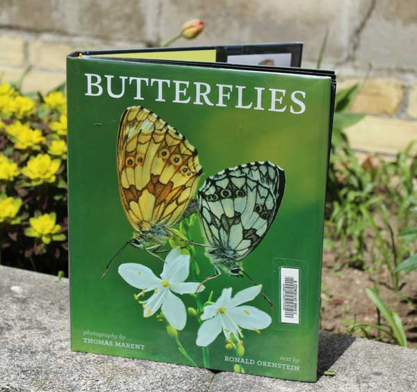 Front cover of the book Butterflies