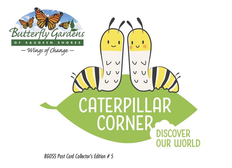 Picture of the Caterpillar Corner Postcard