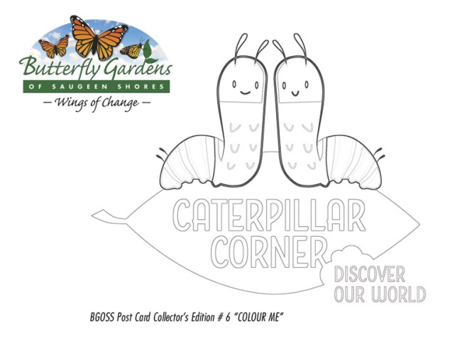 Collector Postcard #6 featuring two caterpillars to color