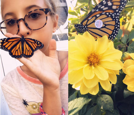 Girl holding a monarch butterfly and a tagged monarch butterfly