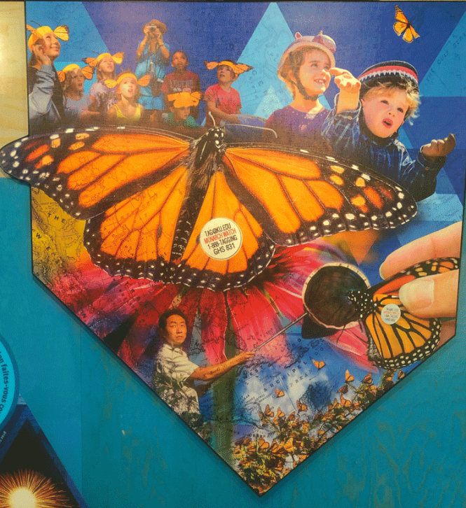 Mural of butterfly migration